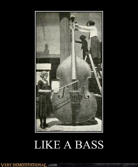 bass hilarious Like a Boss wtf - 5642206976