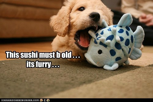 food,gross,labradoodle,plush toy,puppy,rotten food,stuffed animal,sushi,toy