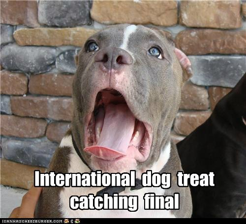 International dog treat catching final