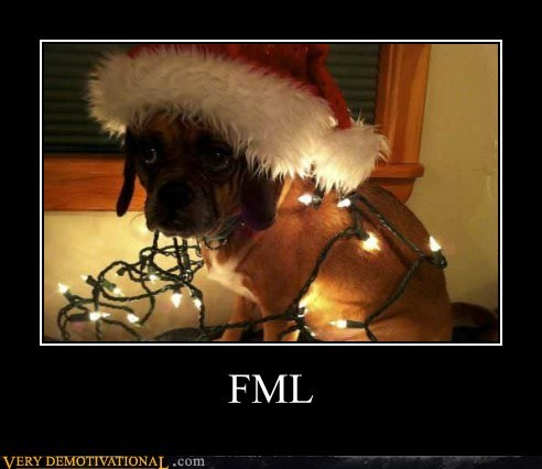 dogs fml hilarious lights wtf