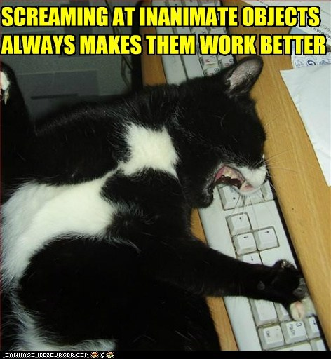 always at better caption captioned cat frustrated inanimate keyboard makes objects screaming work - 5644307712