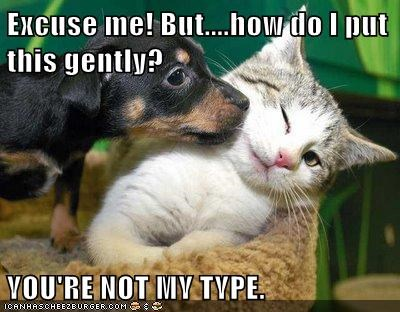 cat dogs not my type - 5644369152
