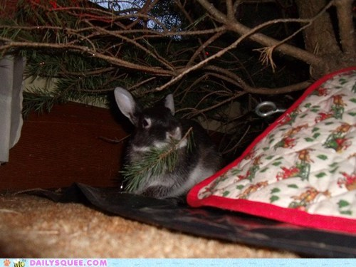 bunny christmas christmas tree gift happy bunday playing rabbit reader squees request tree