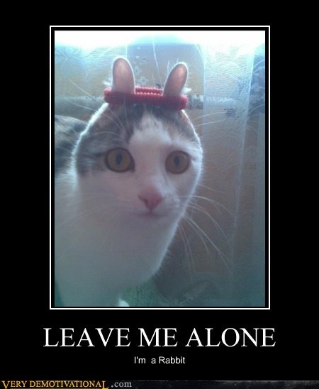 cat Hall of Fame hilarious leave me alone rabbit - 5644454144