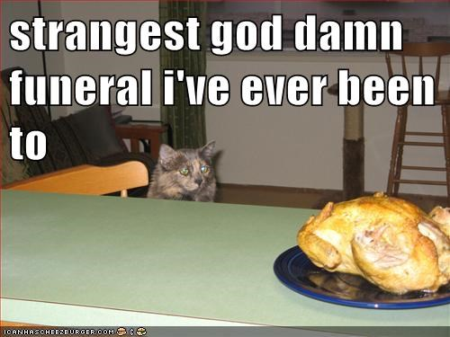 attended been caption captioned cat confused ever funeral noms quote strangest Turkey - 5644577792