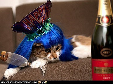 around the interwebs celebration happy new year holidays new year people pets - 5644831488