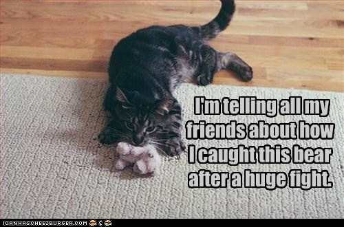 about after all bear caption captioned cat caught fight friends hearsay how huge my stuffed animal teddy bear telling toy