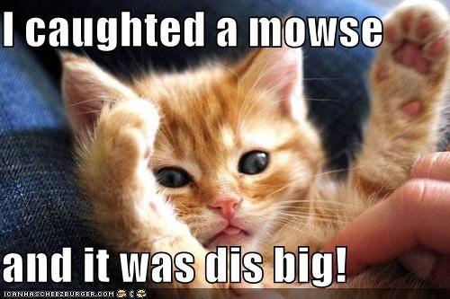 kitten lolcats lolkittehs orange - 564541696