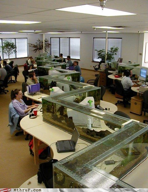 dead animals,fish,fish tanks,office pet,pets