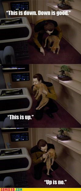 Cats data Star Trek up is no - 5646112768