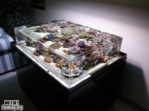 aquarium design fish pets tank water - 5646817024