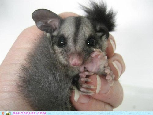 baby,care,heartwarming,Joey,recovery,rescue,rescued,story,sugar glider