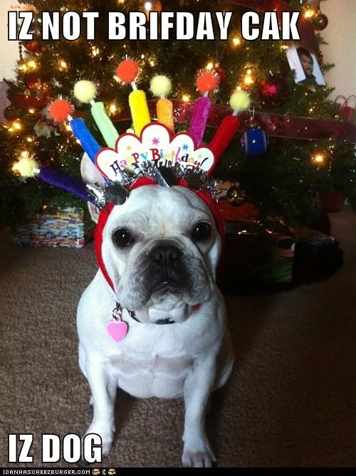 birthday,birthday ckae,cake,french bulldogs,party hat