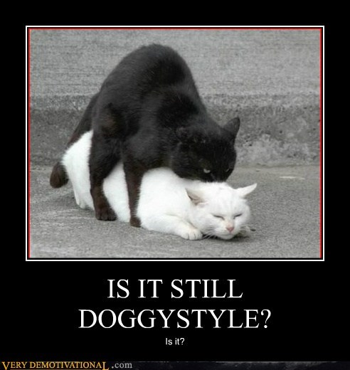 cat doggy style eww hilarious wtf - 5648566784