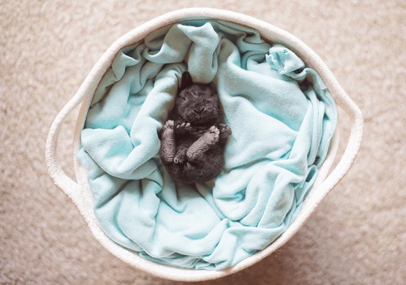 newborn bunny