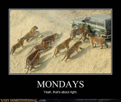 car hilarious mondays tigers - 5648973568
