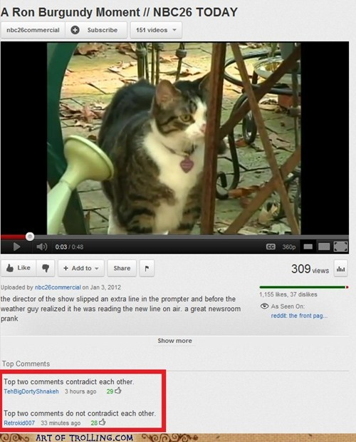 cat comments contradiction youtube - 5648997120