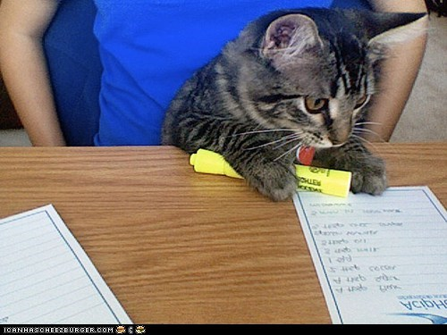 around the interwebs nerds nerdy people pets studying - 5649227520