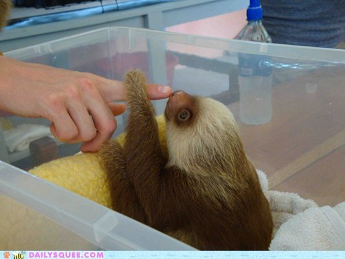 baby curious examining fascinated finger Hall of Fame looking playing sloth squee spree wide eyed - 5649506816