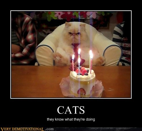 birthday Cats hilarious wtf - 5649608448