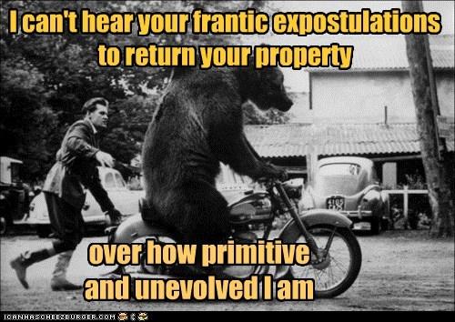 bear funny Photo wtf - 5650154496