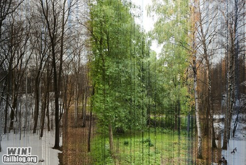 art composite Forest photography seasons time lapse trees