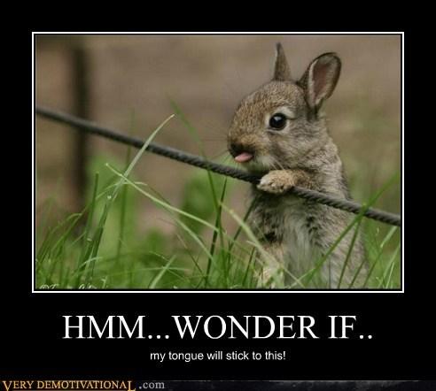 bunny cute hilarious stuck tongue - 5650385152