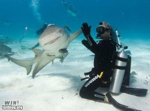 animals,g rated,high five,scuba,scuba diving,shark,underwater,win