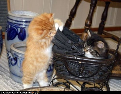 Babies baby carriage cyoot kitteh of teh day kitten pram tiny two cats - 5650585088