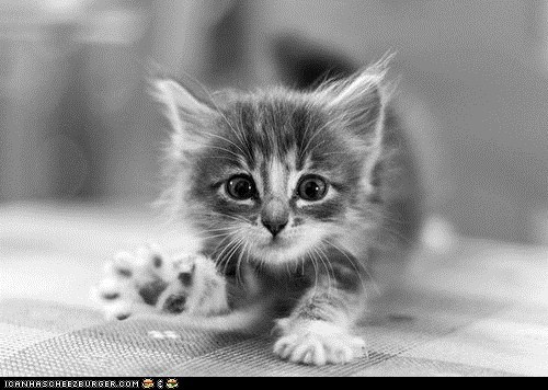 black and white cyoot kitteh of teh day hello paws stretching wave waving