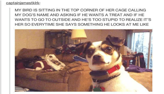 random tumblr memes and fun