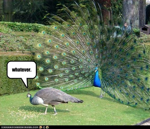 caption,captioned,FAIL,mating,not interested,peacock,peahen,ritual,whatever