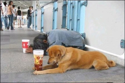 dogs poor heartwarming photos homeless rich - 5651461