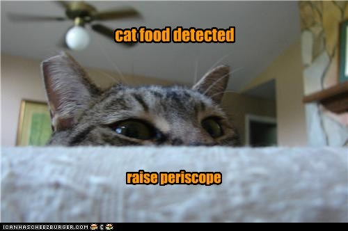 caption captioned cat detected food noms peeking periscope raise
