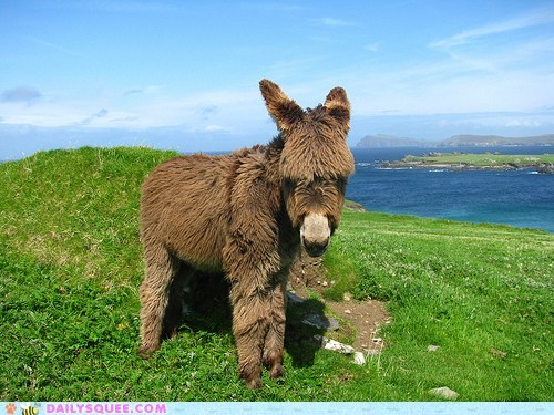 adorable baby bohemian calf donkey hair hairy rant shaggy swag