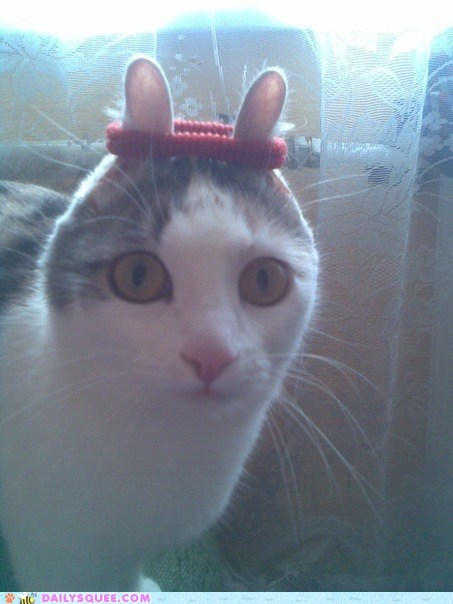 acting like animals cat do not want exercise exercising Hall of Fame new years resolution sweatband sweating sweaty - 5652170240