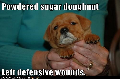 food,noms,powdered doughnut,puppy,treat,whatbreed