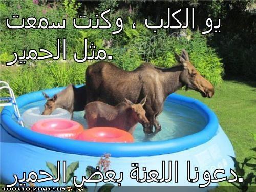 Cheezburger Image 5652494336