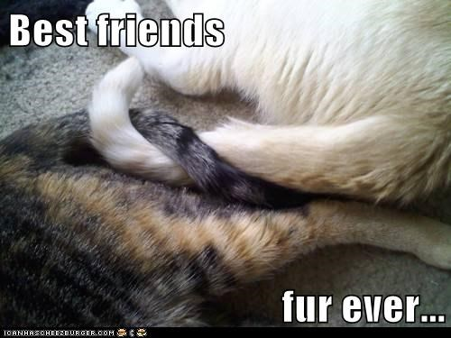 best friends BFFs caption captioned cat Cats entwined forever fur pun tails - 5652874496