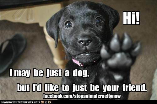 Hi! I may be just a dog, but I'd like to just be your friend. facebook.com/stopanimalcrueltynow