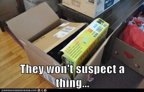 anything,box,boxes,caption,captioned,cat,hiding,peeking,suspect,they,wont