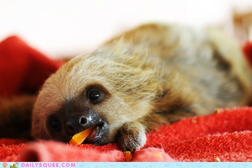 baby epiphany expression Hall of Fame idea nom nomming noms sloth squee spree wide eyed - 5653837312