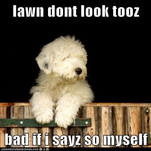 fence,lawn,lawn maintenance,old english sheepdog