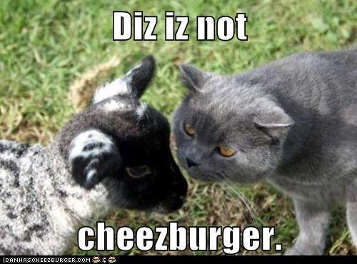 Cheezburger Image 5653929984