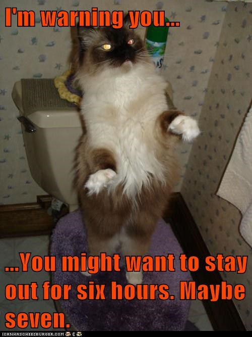advice bathroom caption captioned cat himalayan hours maybe time warning - 5654292736
