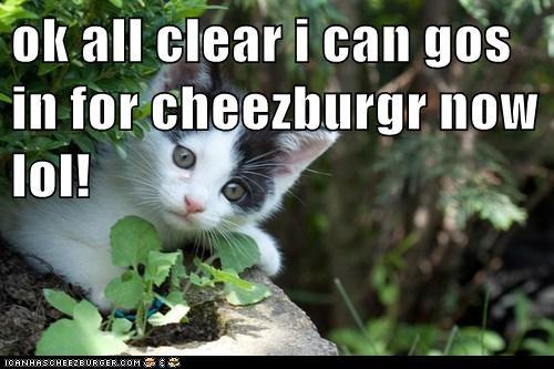 Cheezburger Image 5654522368