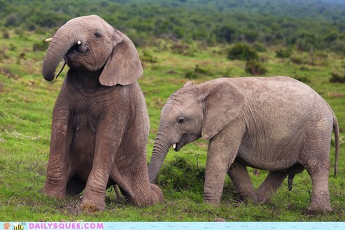 acting like animals,daria,elephant,elephants,on,song,standing,Theme Song,trunk