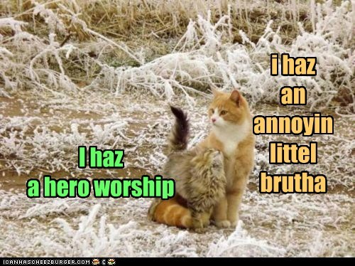 annoying,brother,caption,captioned,cat,Cats,difference,hero,i has,kitten,litle,perspective,siblings,worship