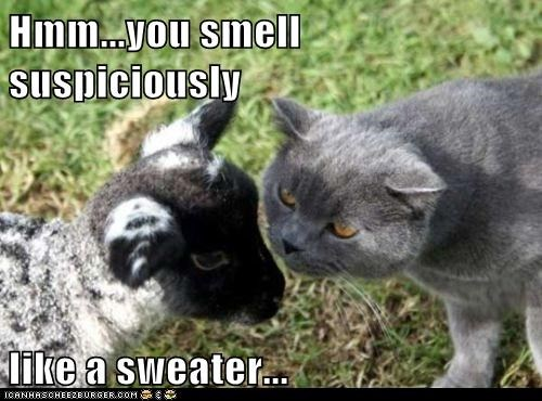 baby,calf,caption,captioned,cat,goat,like,smell,suspicious,sweater