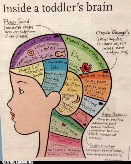 brain crazy diagram g rated parenting Parenting Fail toddler true facts - 5655007488
